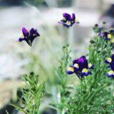 こぼれ種で増える植物おすすめ10選|特徴も!